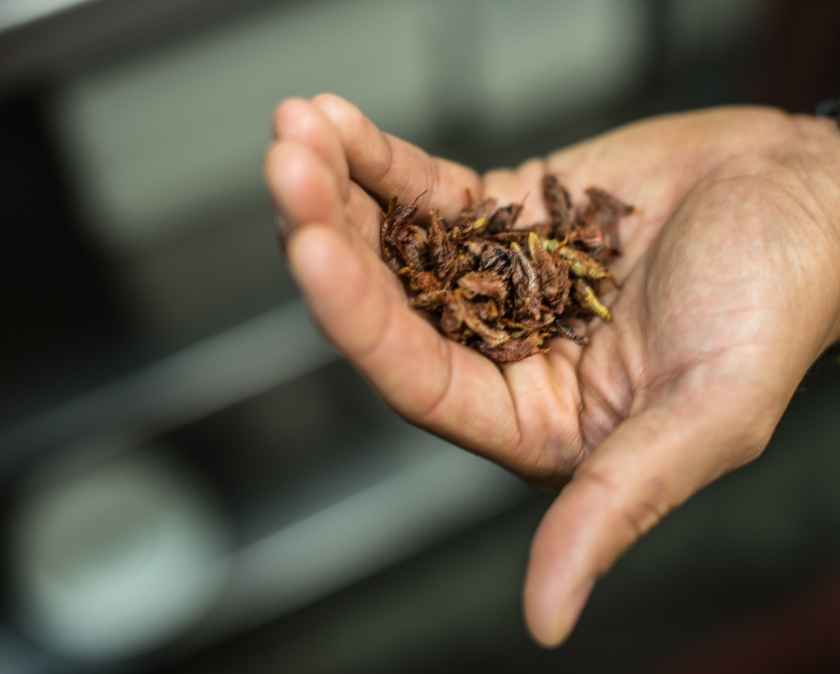 Edible insect movement hops into Austin. | Multimedia Newsroom